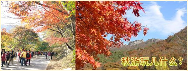 2005年的枫叶于9月28日由金刚山国立公园,往南逐渐变红.